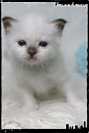 Les bébés de Foxy et Pepper Joe3-3632132