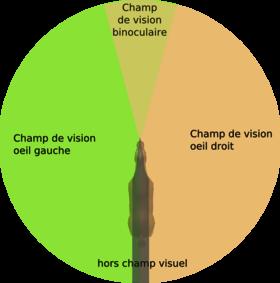 Exercice 5 : le jeu du yoyo avec toutes ses variantes - Page 3 280px-champ_de_vi...u_cheval-347c12d
