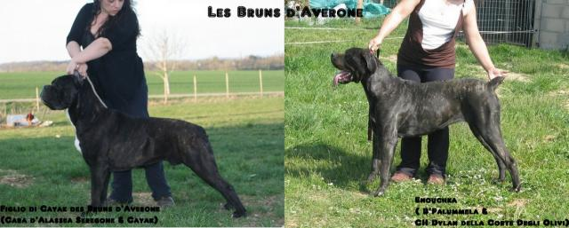 Enouchka & Figlio d Cayak des Bruns d'Averone  Copie-de-054-33065c0
